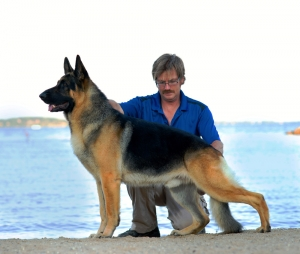 KC German Shepherds