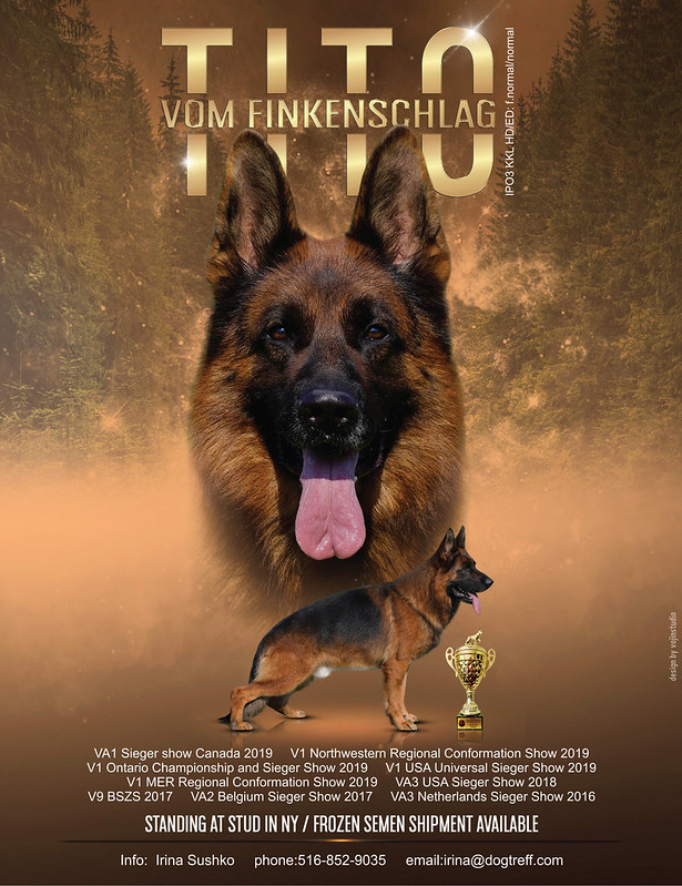 German Shepherd Dog Club of America (GSDCA) - German