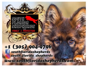 South Florida German Shepherds
