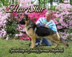 HeartStar Shepherds